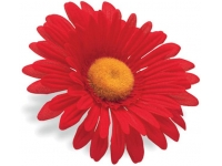 flor guiador electra red sunflower 328635