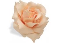 flor guiador electra cream rose 328637
